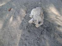 Dog resting in the sand